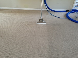 carpet cleaning during